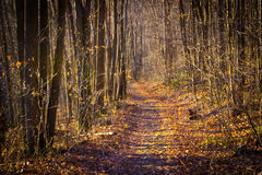 Serene path in middle of autumn forest Stock Photography