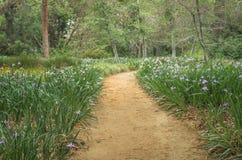 Serene Pathway Stockfotos