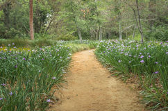 Serene Pathway. A serene dirt pathway bordered by irises and trees Stock Photos