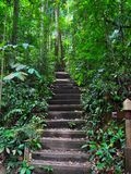 Serene and peaceful stairway in a forest. A serene and peaceful upwards stairway in Bukit Timah nature reserve (Singapore Royalty Free Stock Photos