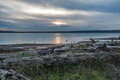 Serene Puget Sound Fotografia Stock