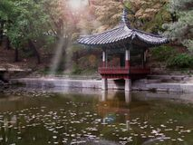 Serene Reflection. Of light in a korean palace zen pond Royalty Free Stock Image