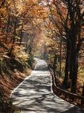 Serene road. Stock Photos