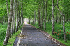 Serene Road. In a forest Stock Images