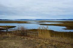 Serene Salt Marsh Arkivbilder