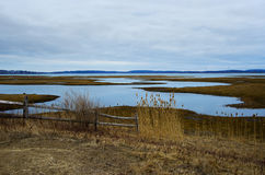 Serene Salt Marsh. On a Winter day Stock Images