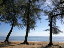 Serene. Seaside scene showing three casuarina trees, beach and blue sky Royalty Free Stock Photo