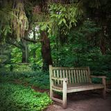 Serene setting park bench in the woods. Serene setting of a park bench surrounded with trees Royalty Free Stock Photo