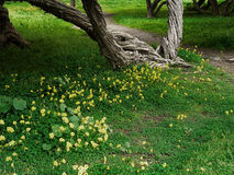 Serene Spring Meadow. Peaceful spring meadow and tree trunks Stock Photos