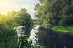Serene summer landscape with small forest river at sunrise. royalty free stock photos