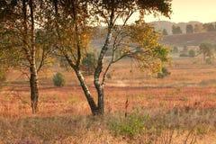 Serene summer morning on marsh Stock Photography