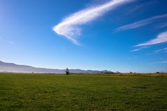 Serene Sunny Field Royaltyfri Fotografi
