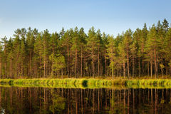 Serene sunny morning forest reflection Stock Image