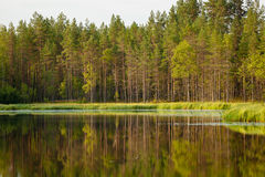 Serene sunny morning forest reflection. In finland royalty free stock image