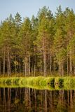 Serene sunny morning forest reflection. In finland stock photos