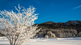 Serene Tree Snow Landscape Mountain stockfoto