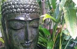 Serene Tropical Buddha Head Fountain Immagine Stock