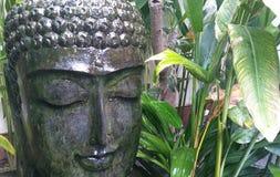 Serene Tropical Buddha Head Fountain. Serene glistening Buddha head  fountain with tropical plants behind Stock Image