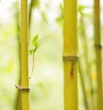 Serene view of bambo. Vibrant leaf bamboo stick illusory background Royalty Free Stock Photo