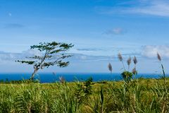 Serene view of blue ocean from green coast Stock Photography
