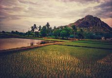 A serene view of fields and hill royalty free stock photo
