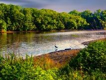 Serene View At The River imagen de archivo