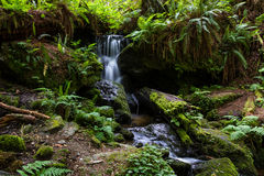 Serene waterfall in the forest Stock Image