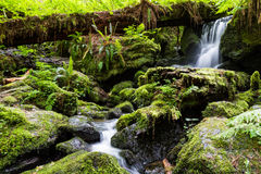 Serene waterfall in the forest Royalty Free Stock Photo