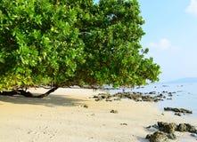 Serene White Sandy Beach avec les palétuviers verts luxuriants sur Sunny Day intelligent - Vijaynagar, île de Havelock, Andaman,  images libres de droits