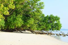 Serene White Sandy Beach avec les palétuviers verts luxuriants sur Sunny Day intelligent - Vijaynagar, île de Havelock, Andaman,  photos stock