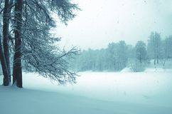 Serene winter landscape with snow covered trees in park during heavy snowfall. stock image