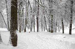 Serene winter landscape with snow covered trees in park during heavy snowfall. royalty free stock photography