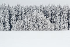 A serene winter landscape with trees covered in snow Royalty Free Stock Photography