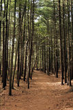 Serene Wooded Path. Quiet path in dense forest Stock Photos