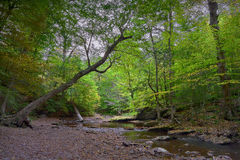Serene Woodland Creek Royalty Free Stock Photography