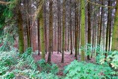 Serene Woodlands con la iluminación suave fotos de archivo