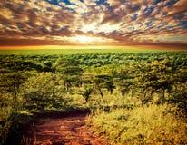 Serengeti大草原横向在坦桑尼亚,非洲。 免版税库存图片