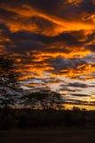 Serengeti - αυγή στρατόπεδων σαφάρι στοκ εικόνες