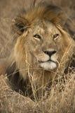 serengeti национального парка Африки животное одичалое Стоковая Фотография