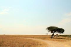 Serengeti Stock Images