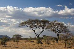 serengeti Stockbild