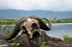serengeti Imágenes de archivo libres de regalías