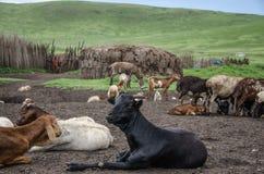 serengeti Fotografía de archivo libre de regalías