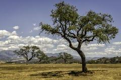 Serengeti de la Californie Photos libres de droits