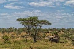 Serengeti flora and fauna Royalty Free Stock Image