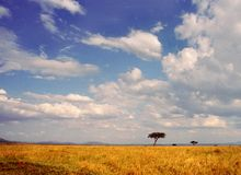 Serengeti landscape. With acacia tree, blue skies and white clouds. Tanzania Stock Photography