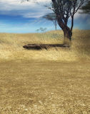 Serengeti landscape scene Royalty Free Stock Photos