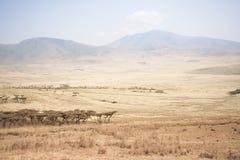 Serengeti landscape. Travel to Tanzania, this view before entering the Serengeti Royalty Free Stock Image