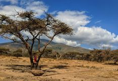 Serengeti life royalty free stock photography