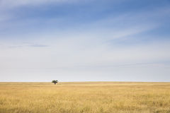Serengeti. Lonely tree in the vast plains of the Serengeti, Tanzania, Southeast Africa royalty free stock image